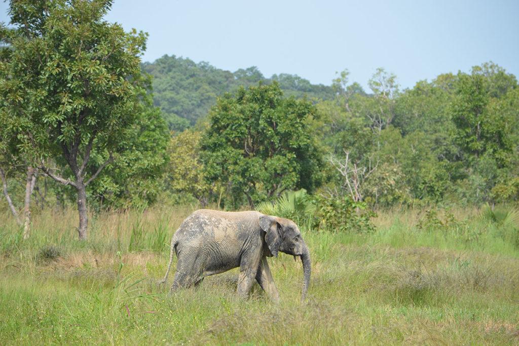 Die Elefanten von Djamdé.