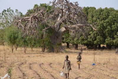 Ein uralter Baobab ganz im Norden Togos