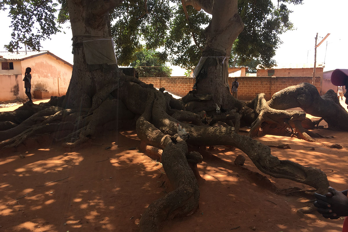 Voodoo-Baum in Togoville